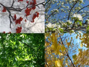 Tiempo y clima en Moscú en Primavera; Tiempo y clima en Moscú en Invierno; Sobre el tiempo y clima en Moscú